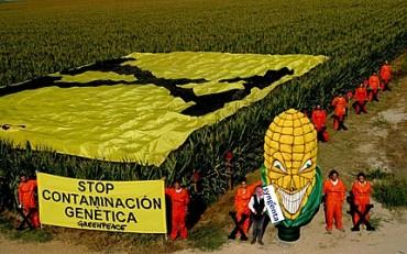 Greenpeace en acción contra ma�z modificado genéticamente