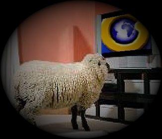 sheep tv globovision
