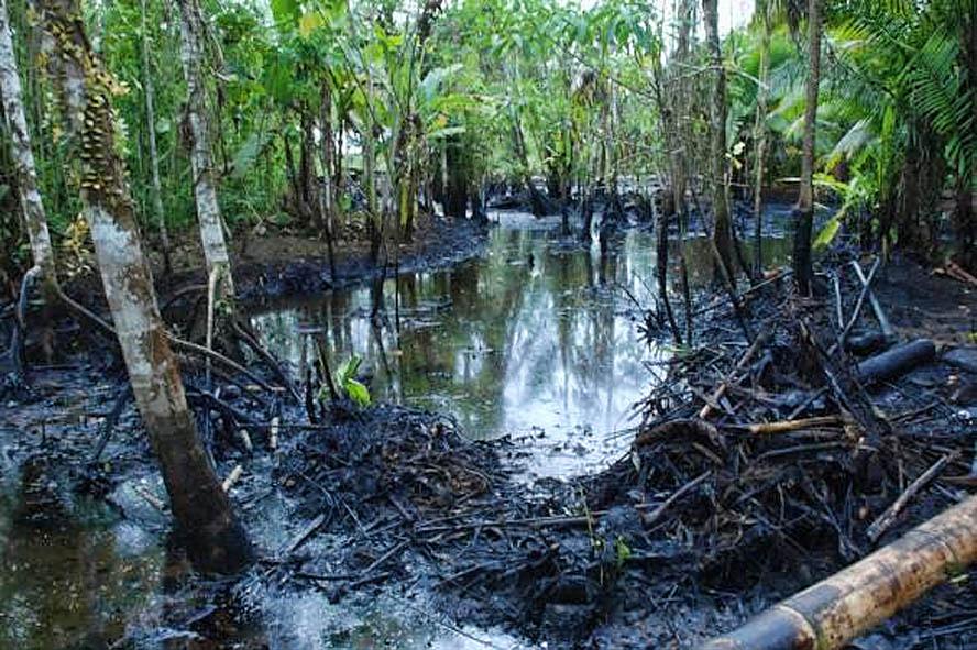 el petroleo en la selva: